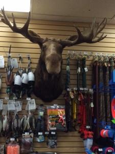 moose)